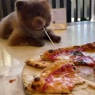 id_52407 Аж пиццы захотелось! 😁  #gif@bon