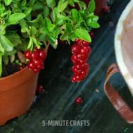 id_49697 Много полезных идей для садоводов и не только 👇🏻  #gif@bon