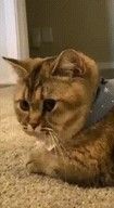 id_15640 Я: открываю холодильник Мой кот:...  #gif@bon