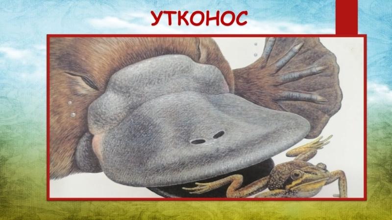 Анита Ганери Утконос.