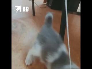 Video từ Комсомольская правда - Красноярск