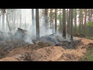 В Пермском крае произошел первый крупный лесной пожар