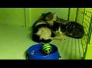 Знаменитые котята ищут дом