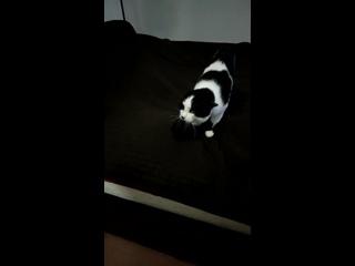 Есть кто понимает кошачий-матерный? #Кот #Хэллоуин #Парик #Юмор #Видео
