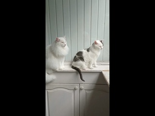 Академия «42 кошки» kullanıcısından video