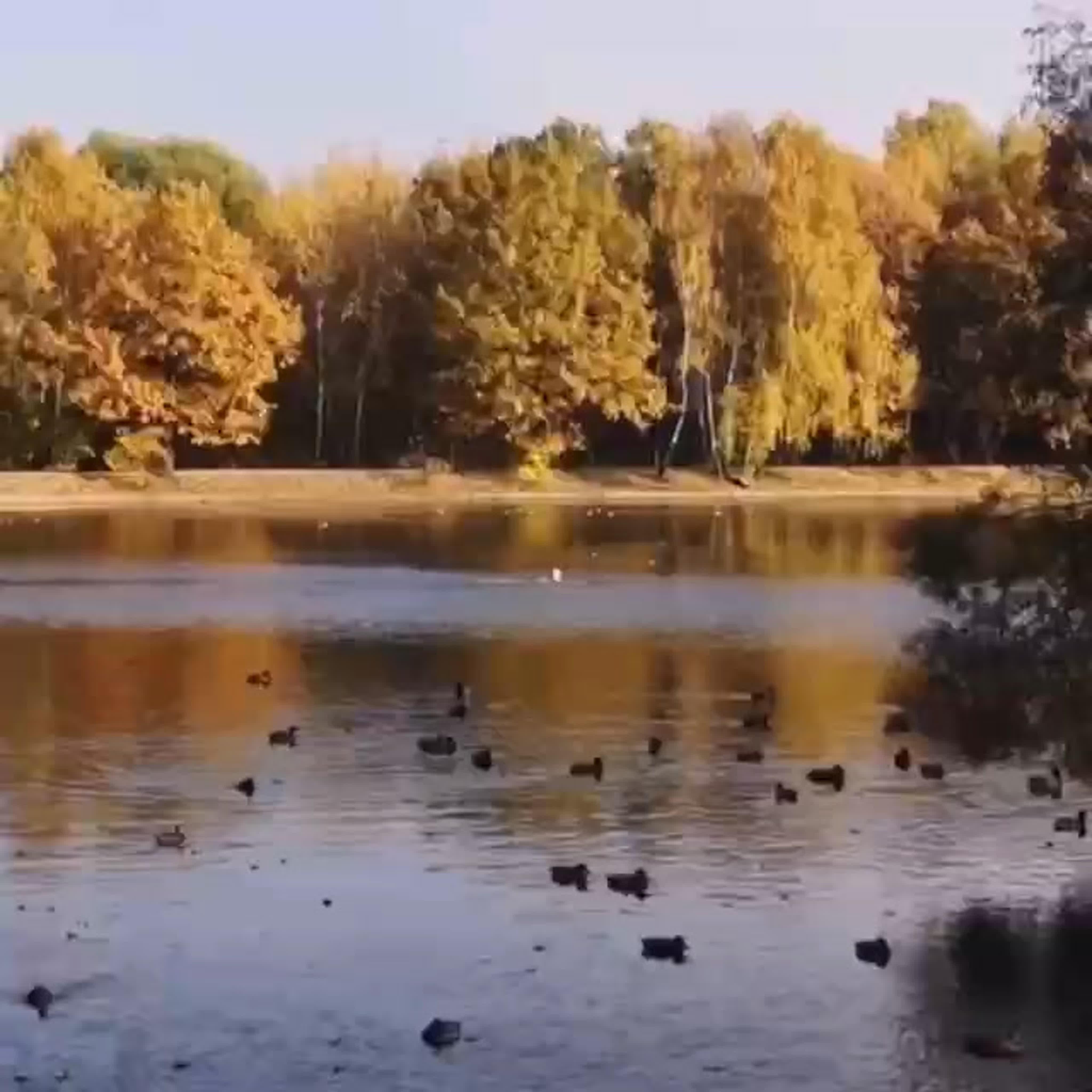 В Терлецкой дубраве шел 73 день августа.