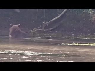 Video by ДОМ ЛОСОСЯ