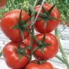 Biogreen Agro
