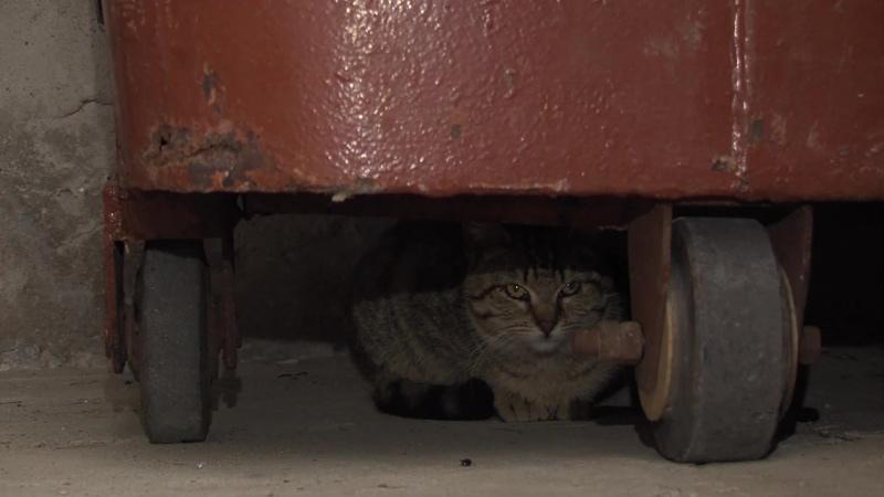 Защитим кошек