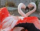 Фотоальбом Анны Фламинго