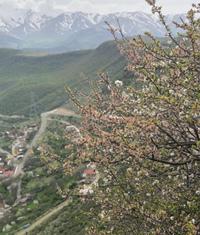 Сати Атанесян фото №28