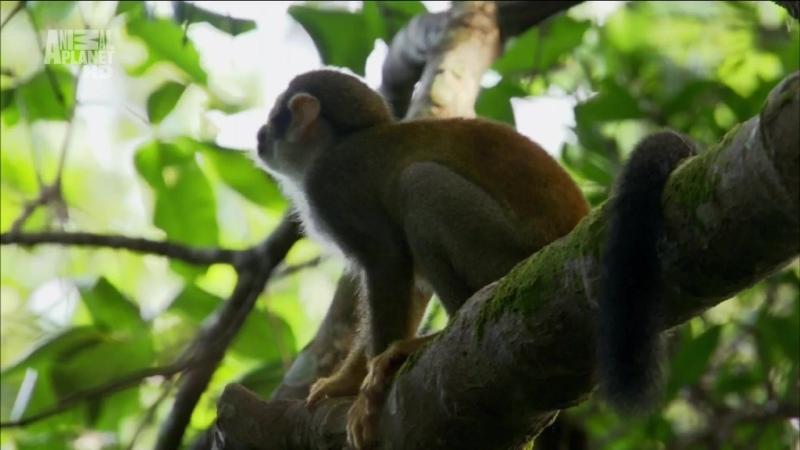 Амазонка Один лес множество миров