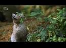 Дикие охотники Кошки 2019
