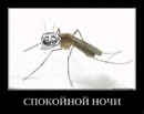 Фотоальбом Виталия Негева