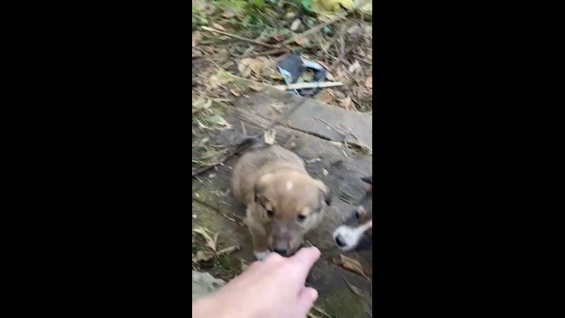 Видео от Ирины Астаховой