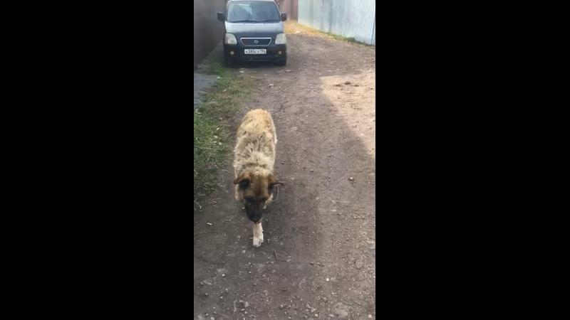 Видео от Приют для животных Того г Челябинск