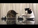 Самое прикольное видео про кошек.