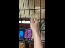 Видео от Кристины Курдояк