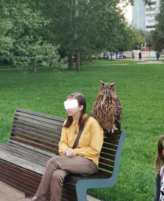 Ничего необычного, просто девушка выгуливает филина в районе Медведково