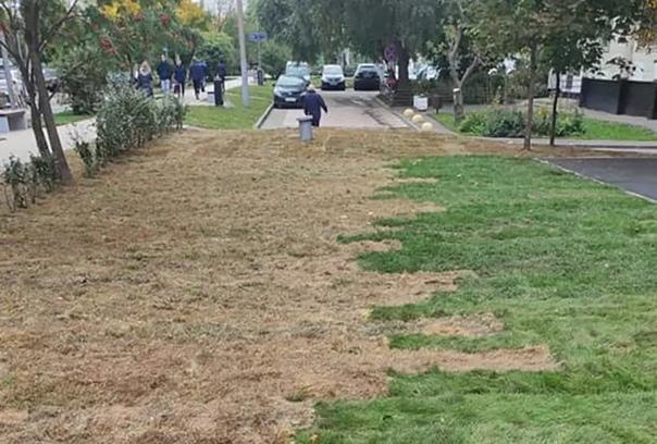 Москвичи пожаловались на укладку «осенней» травы н...