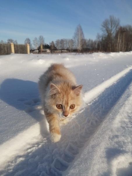 🆘🆘🆘Дорогие Азовчане, земляки!🆘🆘🆘Пожалуйста, помогите найт...