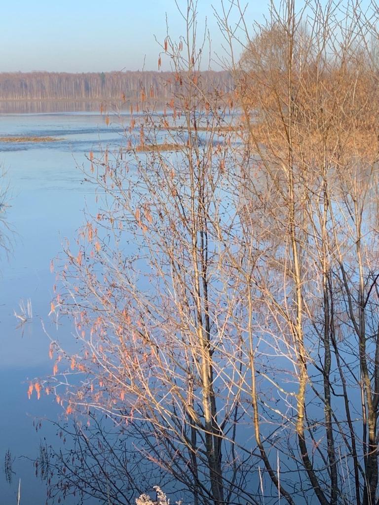 Половодье. Река Вала📸 Наталья Набиева#Природа_Родного_Можгинского_района #Можгинскийрайон #Красоты_Можгинского_района