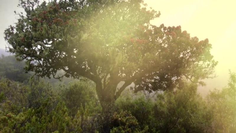 Восстанавливает Истонченную Ауру Магическая Музыка Сандал