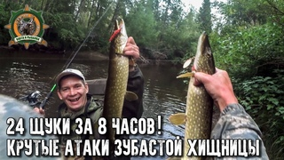 24 щуки за 8 часов рыбалки!/Оборвали все поводки!/Атаки зубастой хищницы на камеру