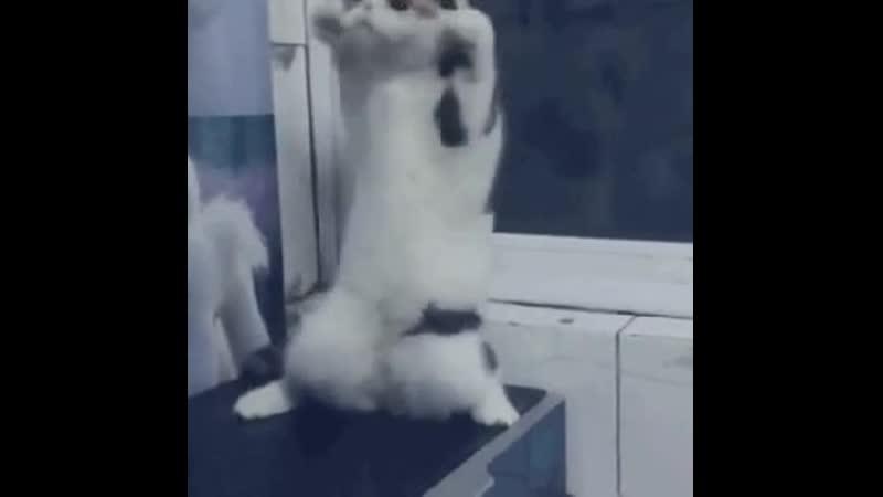 Лучшие видео приколы смешные свежие подборка новинки самые топ смотреть интересно смех веселая животные котики 2019 Fun Gifs