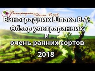 Обзор ультраранних и ранних сортов и гибридных форм винограда Шпака В.А. в 2018 году.