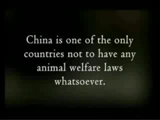 это творят эти ебанутые китайцы я ненавижу их. смотрите что они сделали с этими животными!!!!!!! это