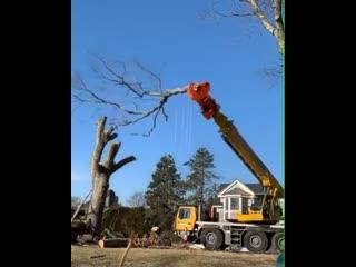 Машина для спила деревьев