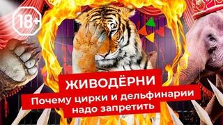Цирк и дельфинарий: животные страдают ради шоу | Побои, мучение и издевательство
