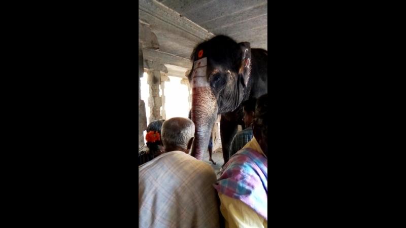 Слон в Хампи