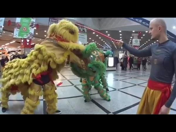 Танцы львов Шоу
