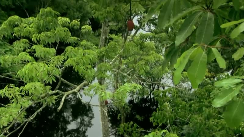 Амазонка 2021