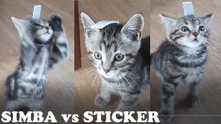 Котенок пытается снять стикер 😸Котик Симба играет 😻 Котики😺😺😺