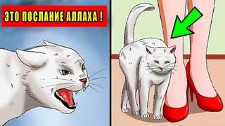 Если кошка приближается к вам..то это означает, что для вас есть 3 послания от Бога! АльхамдулилЛях!