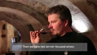 Domaine de la Noblaie - Interview with Jérôme Billard, owner and winemaker