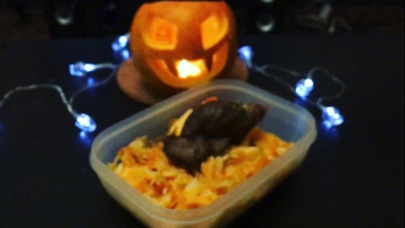 Halloween pumpkin handmade snail harrysnail harryalien emo