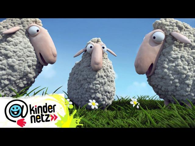 Muh macht das Schaf   Ich kenne ein Tier   SWR Kindernetz